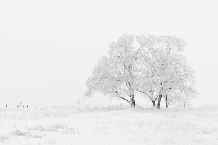 3 подсказки, как красиво сфотографировать снег