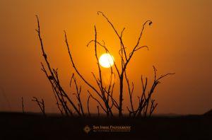 Sunset in the desert, UAE